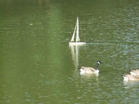 boat goose